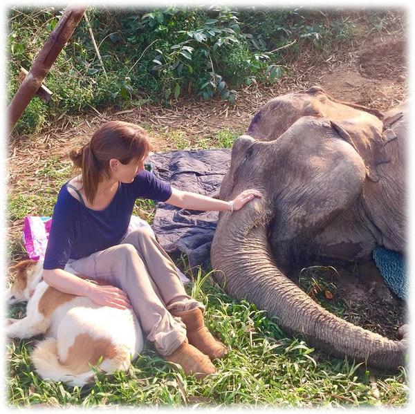 -Он спокойно лежал рядом со слоном, до заката - до последнего вздоха--5 фото-