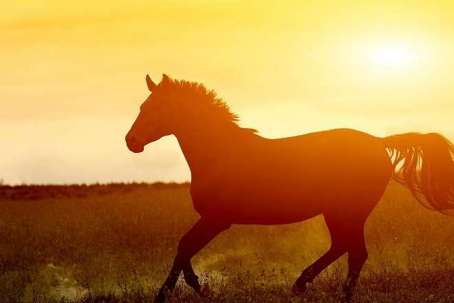 Любопытное о лошадиной силе