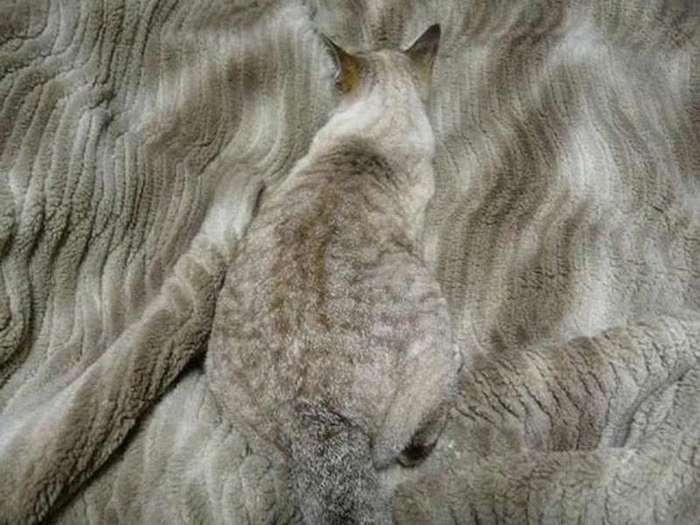 Найдите кота
