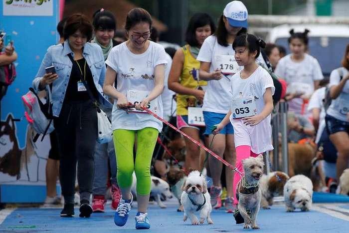 Мини-марафона для собак в Бангкоке