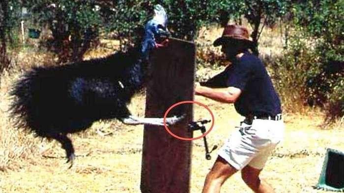 15 доказательств, что Австралия - одна гигантская смертельная ловушка