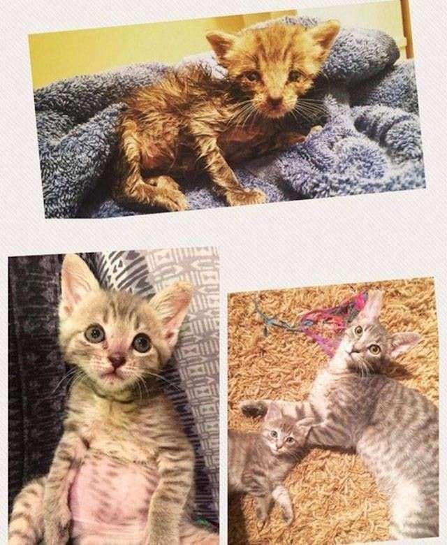 Животные в приюте и дома