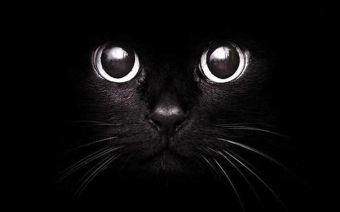 Плюнь через плечо, черная кошка дорогу перебегает - к удаче: странные приметы, в которые мы верим