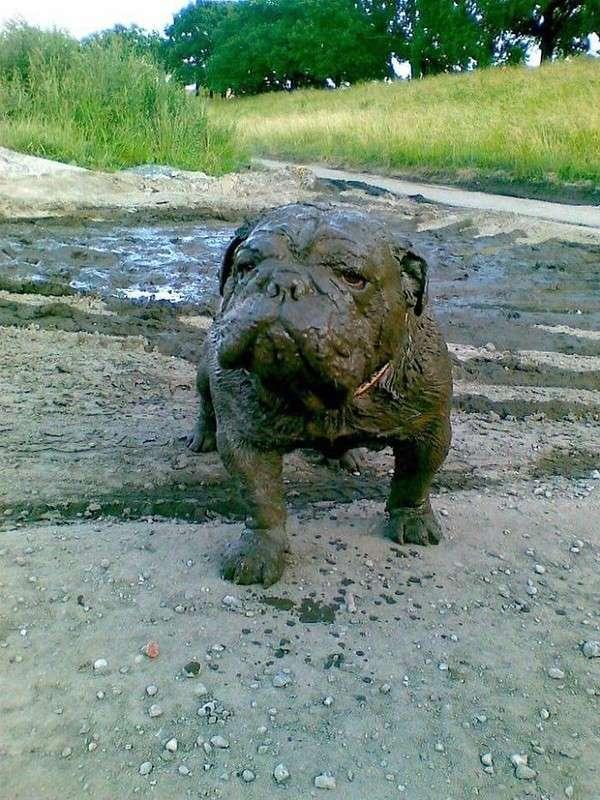 50 причин, почему не стоит разрешать своей собаке играть в грязи