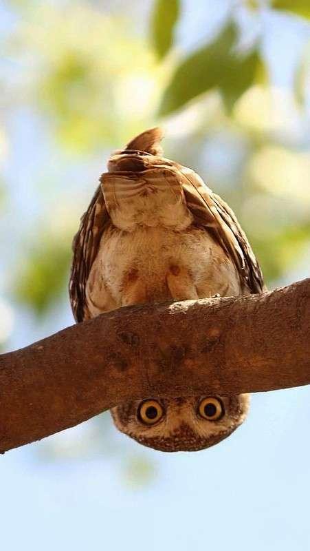 У глазастой совушки хищная головушка, перышки пушистые, ноженьки когтистые