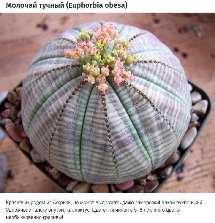 10 удивительных комнатных растений, о которых вы еще не знаете.