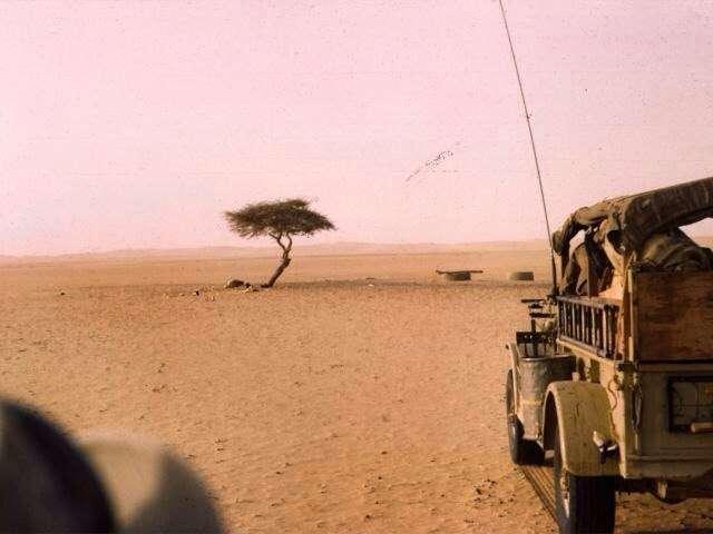Дерево, которое помнят и чтут