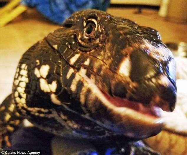 Огромная ящерица больше всего любит обниматься и целоваться