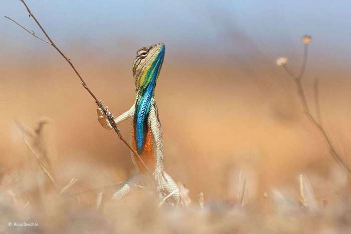 Финалисты конкурса на самую весёлую фотографию дикой природы.