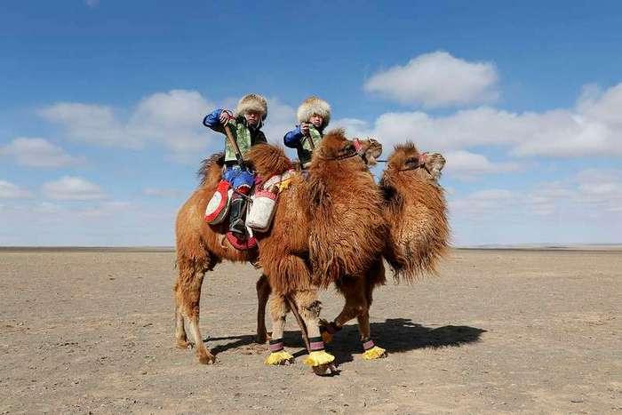 Верблюжий фестиваль в Монголии