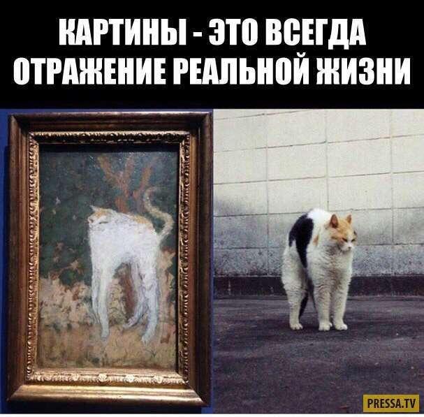 Жизненные приколы в картинках