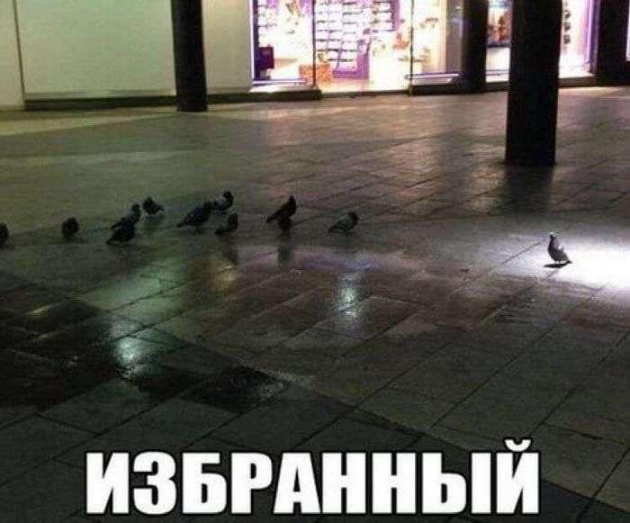 ФОТО ДЛЯ ОТЛИЧНОГО НАСТРОЕНИЯ НА ВСЮ НЕДЕЛЮ