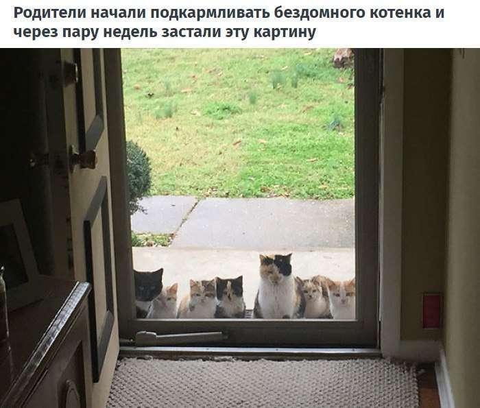 10 случаев, когда люди думали, что у них нет кота, но вот же он...