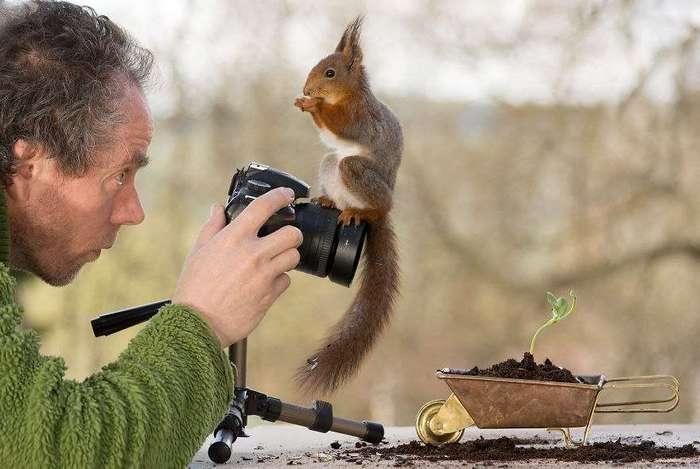 Фотограф снимал белок в течение 4 лет, и теперь они полностью доверяют ему, а иногда даже мешают сделать кадр.