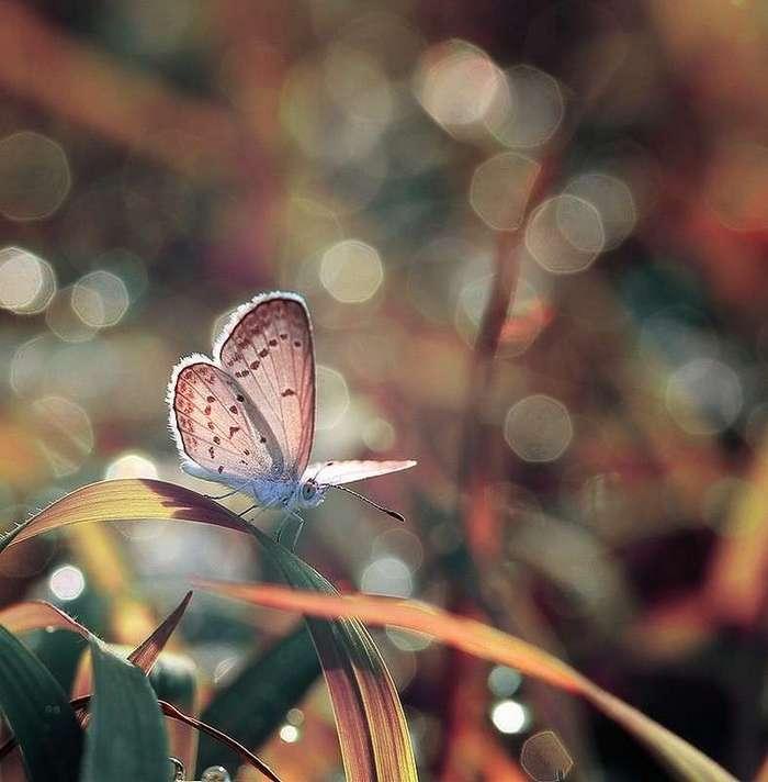 Замечательные макрофотографии насекомых