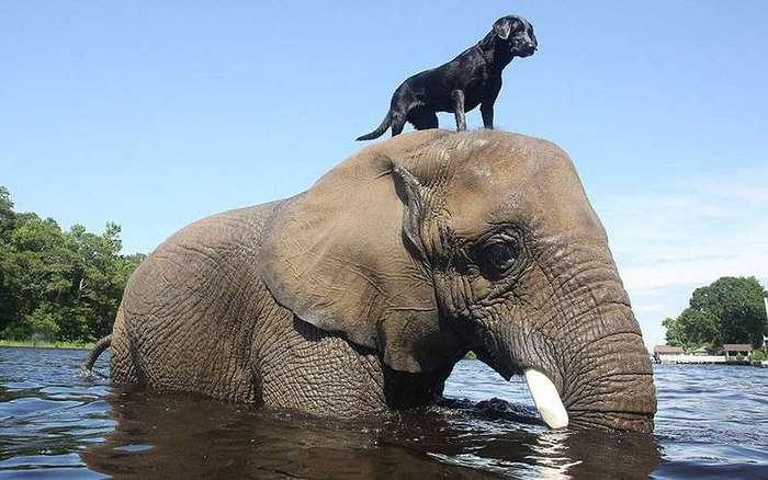 Слон и пес, которых подружила вода