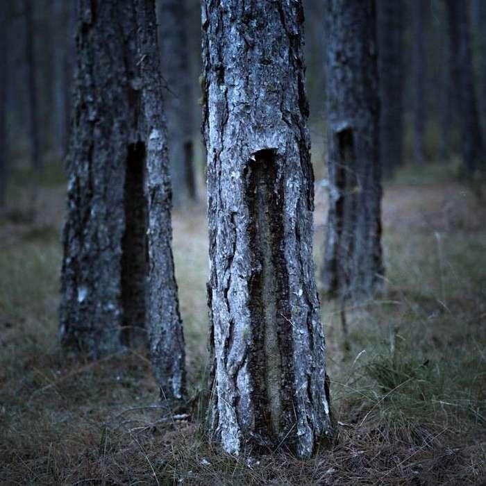 Дети оленей: жизнь в -испанской Сибири-