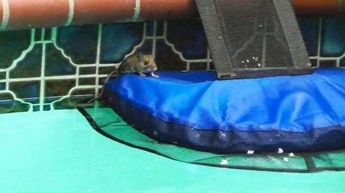 Это гениальное изобретение способно спасать животных от ужасной смерти