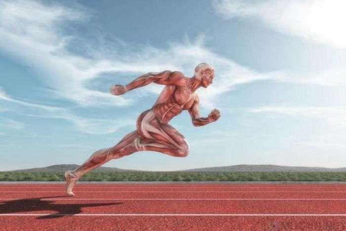 10 физиологических различий ведущих спортсменов