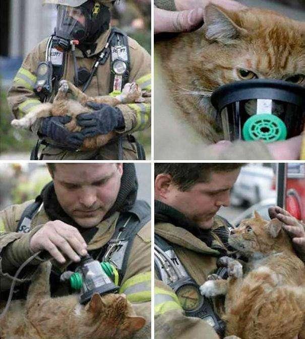 Спасенные жизни.