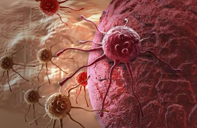 Почему рак не убивает сам себя ?