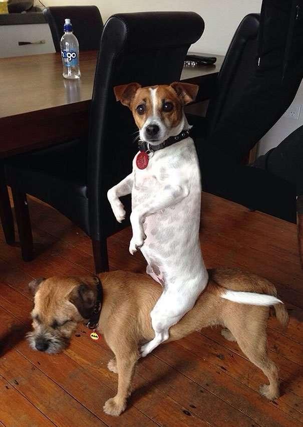 Смешные собаки, которые делают странные вещи.