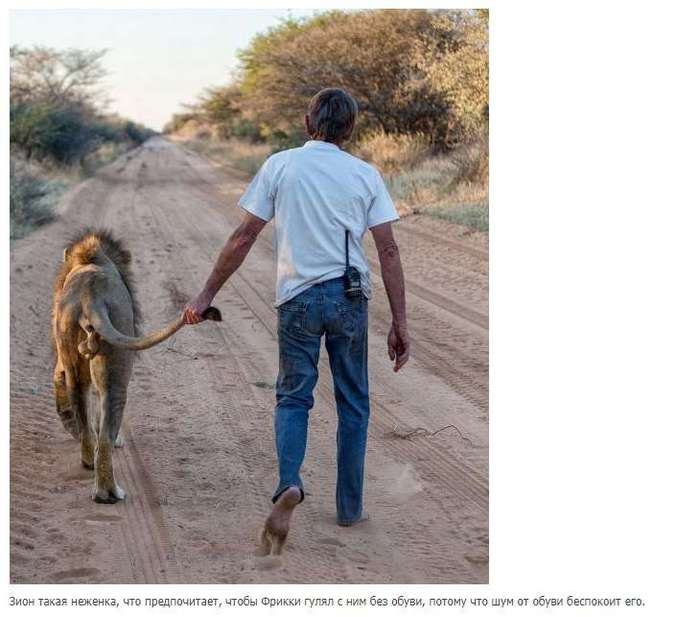 11-летняя дружба между львом и человеком, который его спас.