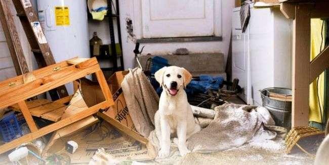 Как правильно оставлять собаку одну дома
