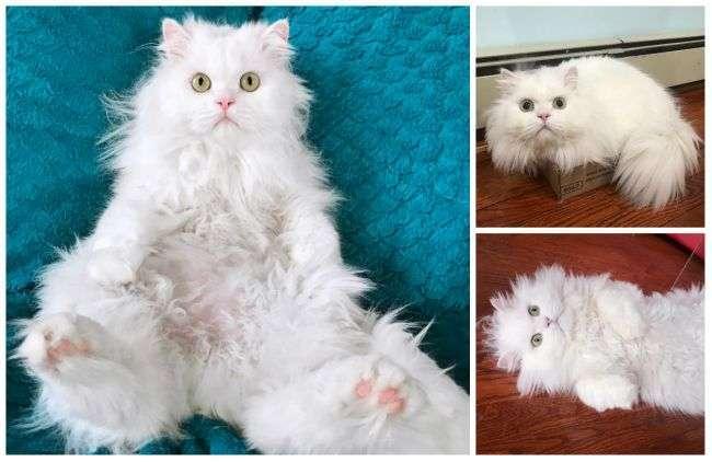 Поедающий пончики кот Каспер стал новой звездой Сети