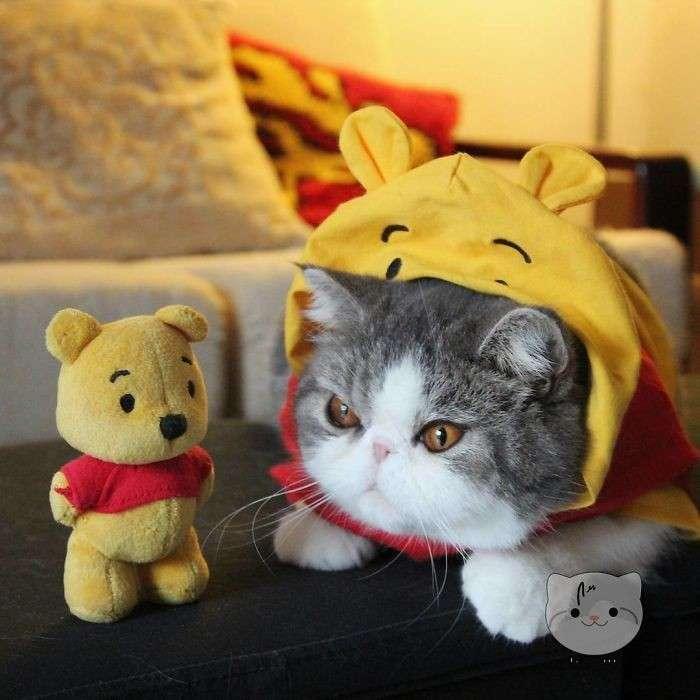 Пушистый косплей: котики в образах всем известных героев