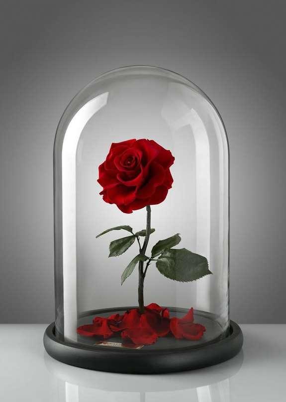 Розы в стиле мультфильма -Красавица и чудовище-
