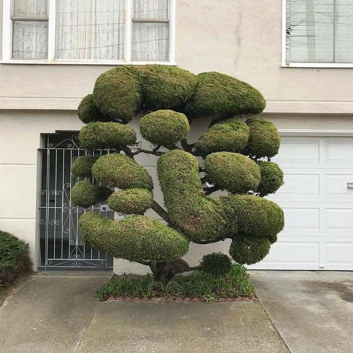 Сюрреалистические деревья