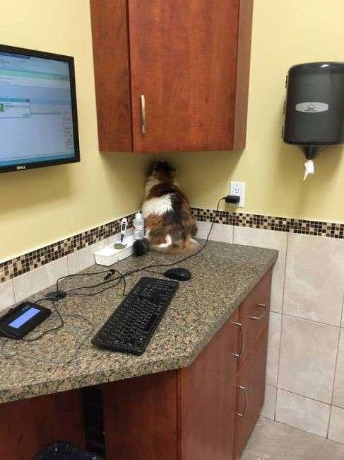 Эти животные не знакомы между собой, но на приеме у ветеринара применяют одинаковую тактику: -если я не вижу тебя, то и ты меня не видишь-