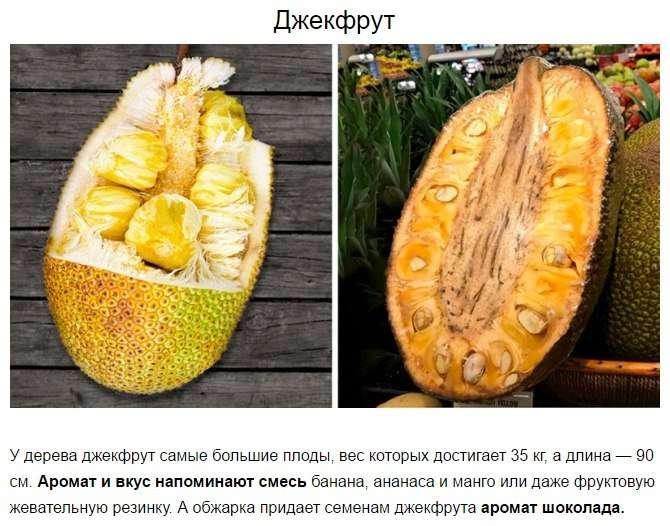10 редчайших экзотических фруктов, которые нужно попробовать хотя бы раз в жизни