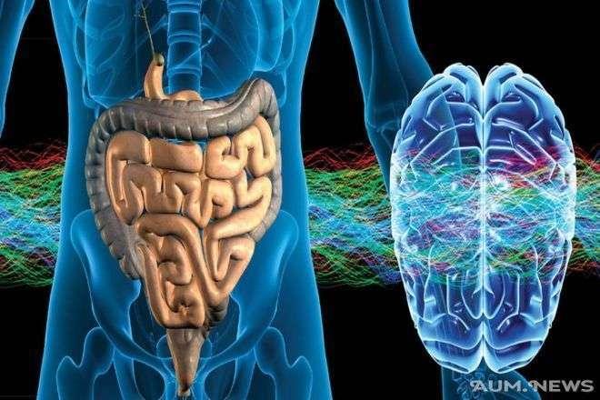 Кишечник – второй мозг. Энтеральная нервная система