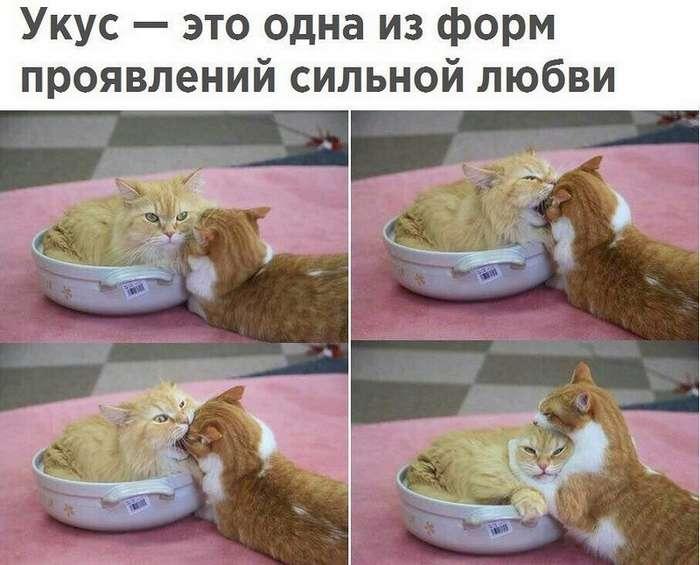 Подборка интересных и веселых картинок 03.08.17