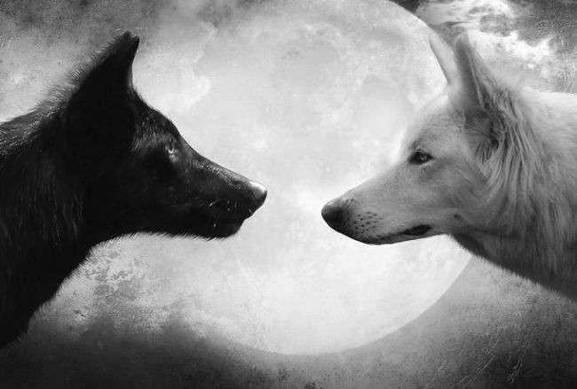 Притча про двух волков