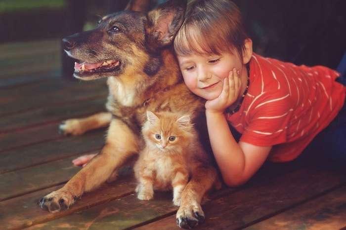 Животные, которые могут нас спасти: как собаки и кошки лечат болезни