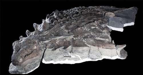В Канаде обнаружили хорошо сохранившиеся останки динозавра, которые можно принять за скульптуру