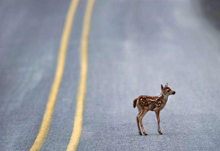 15 фактов, которых вы не знали о дорожном движении