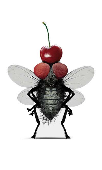 Орден золотой мухи