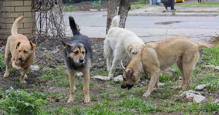 Эти собаки охраняли маленькое сокровище, брошенное умирать в лесу