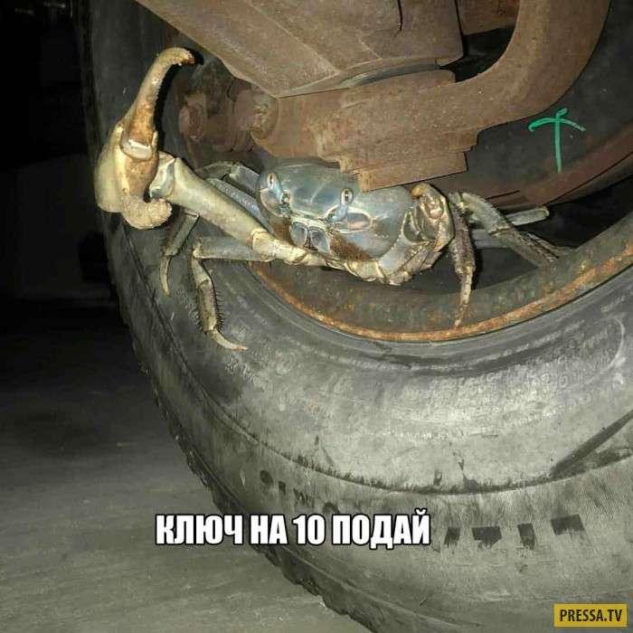 Автоприколы и смешные ситуации с Российских дорог