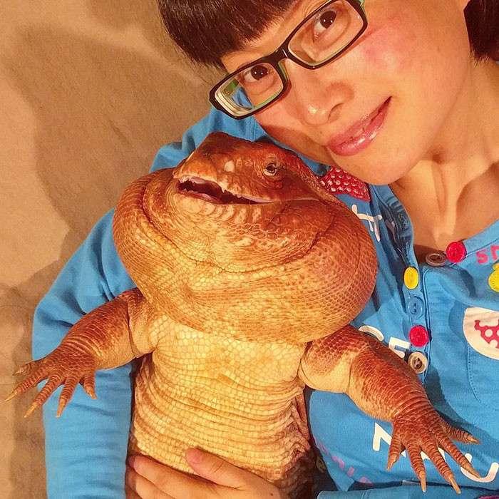 Тегу - огромная ящерица
