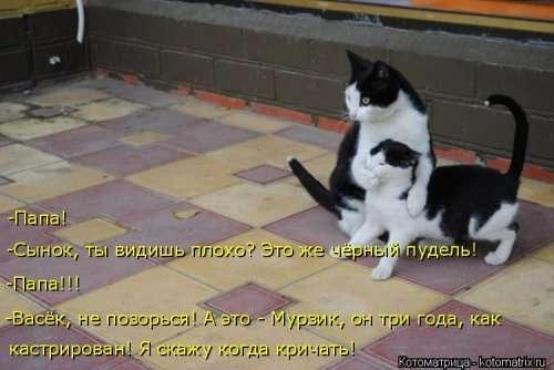 Еженедельная порция прикольных котоматриц