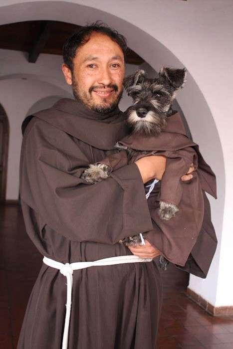 Самый необычный монах: обычная дворняга стала послушником в католическом монастыре