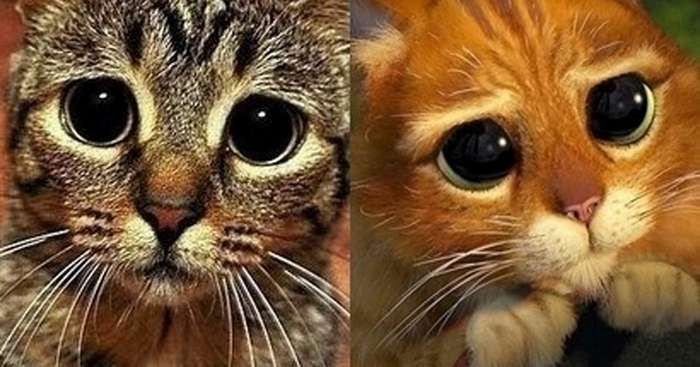 Кошки, которые -строят глазки- своим хозяевам