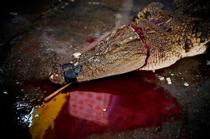 Экзотические блюда китайской кухни из редких видов животных