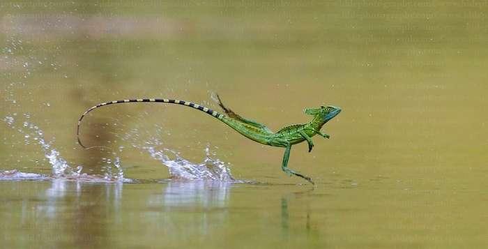 Интересные факты про озеро Никарагуа