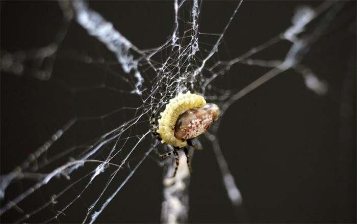Удивительные способности паразитов